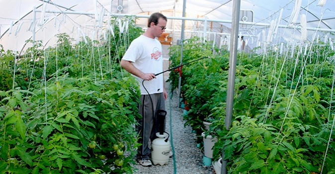 Amazing In The Summertime, Client Employees Grow Tomatoes The Traditional Way, In  The Rosewood Gardens. But Throughout The Year, They Continue To ...